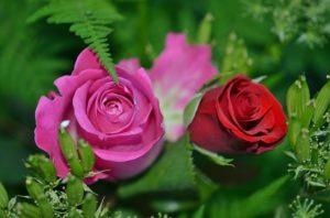 Flower Advisor Toko Bunga Online
